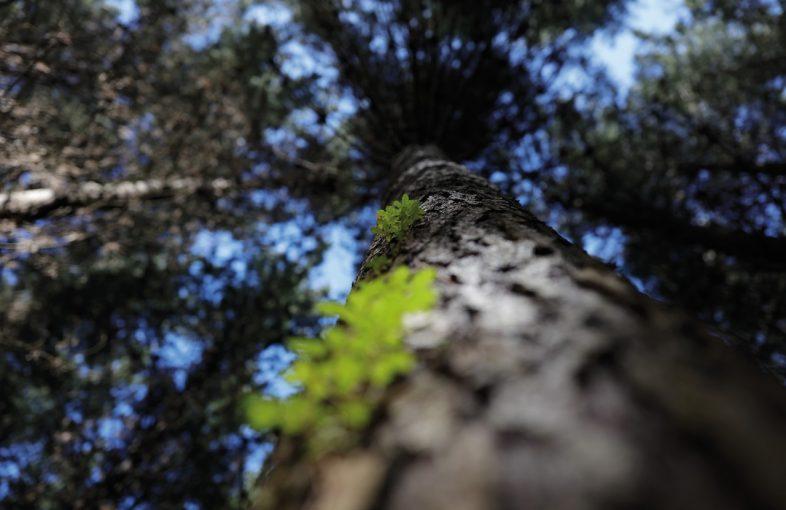 foto arauco bosques