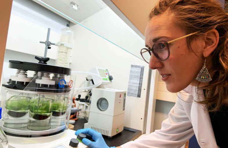 Papel alga UdeC 2
