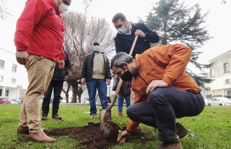 Corma dona 500 plantas nativas en Ñuble_2